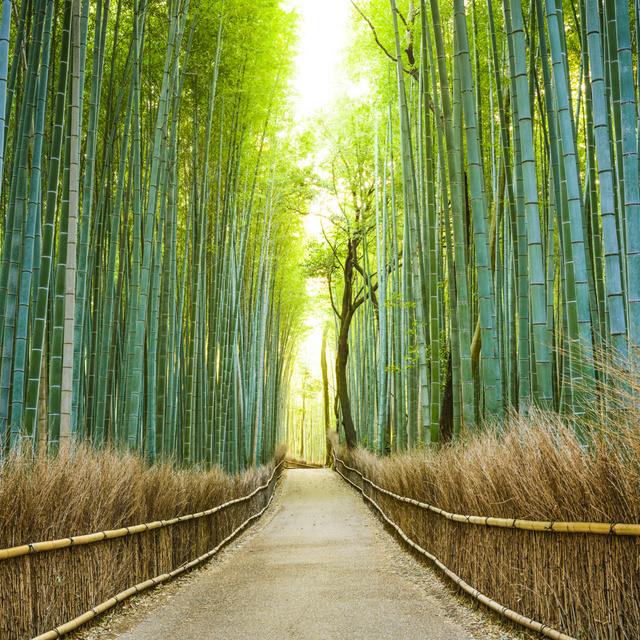 A világ 10 legszebb erdeje, ahol a természet az úr: Japán csodás bambuszligete a hangjairól is híres