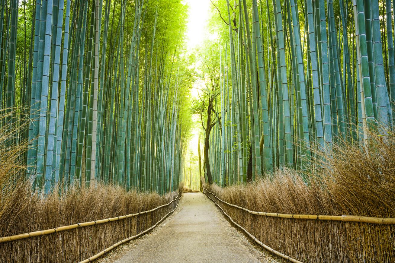 Arasijama bambuszliget