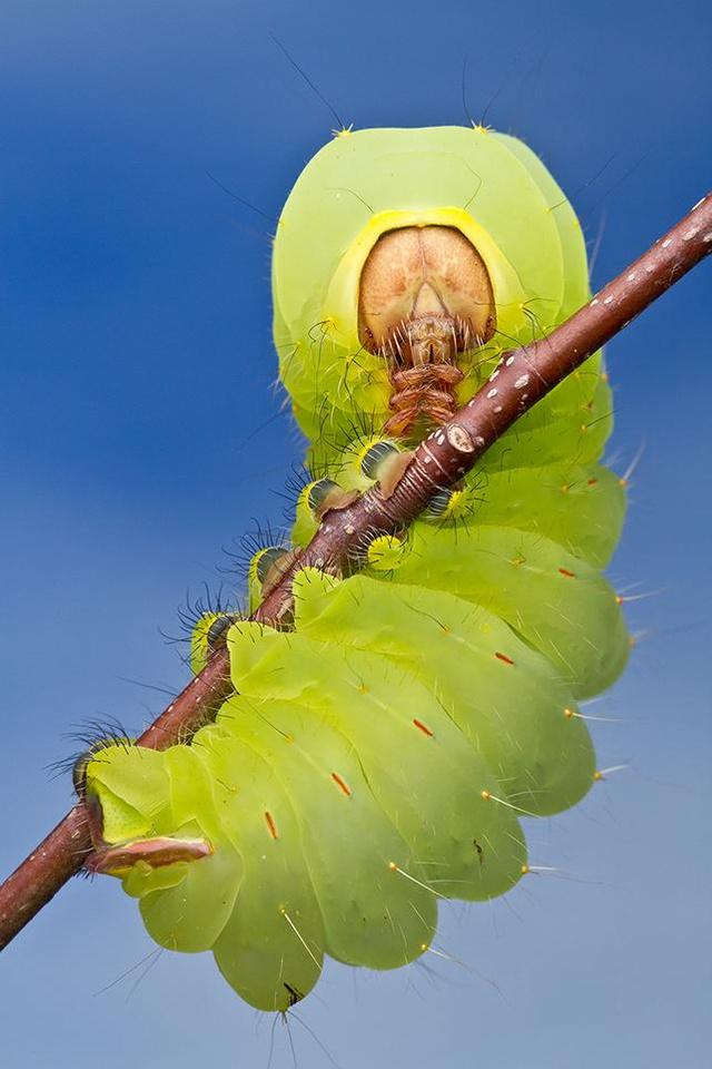 smithsonian-photo-contest-naturalworld-catapillar-green-macro-co
