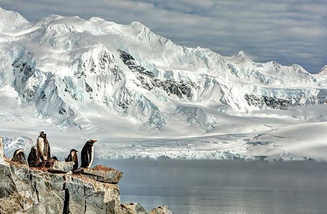 smithsonian-photo-contest-naturalworld-bird-penguins-arctic-glac