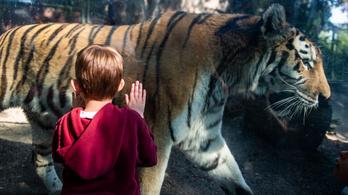 Sérült gyermekeknek szervez programot a budapesti állatkert