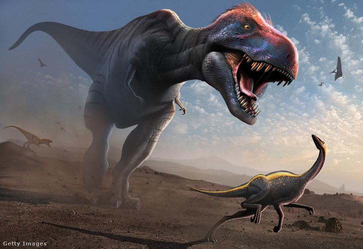 Ornithomimust kergető Tyrannoszaurusz - ilyenek lehettek az arányok