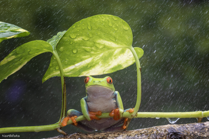 tk3s h mdrum umbrella frog-5