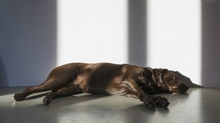Nem tud pislogni a kutya? Súlyos tetanuszfertőzést kaphatott!
