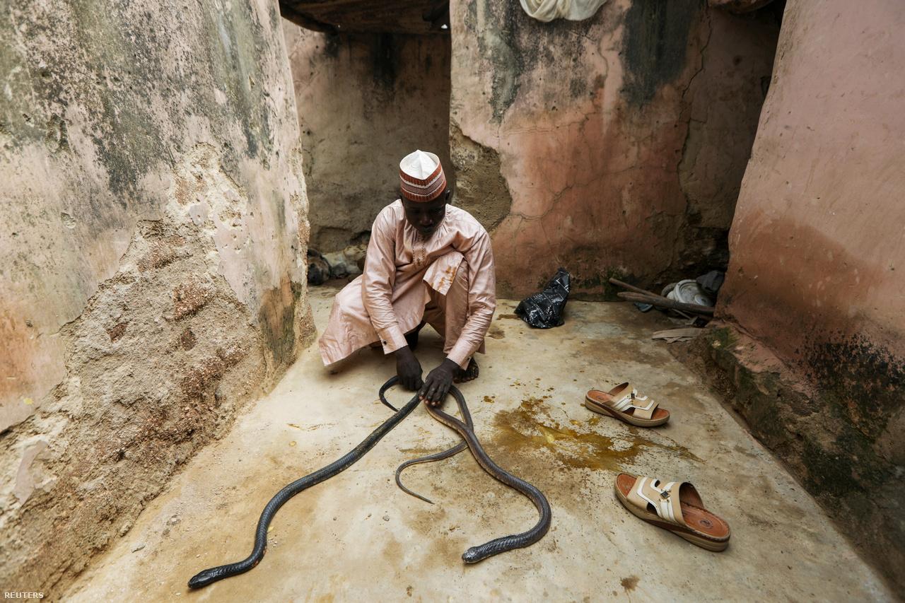 Kígyókat tart vissza Kawu. A kép a férfi otthonában készült.