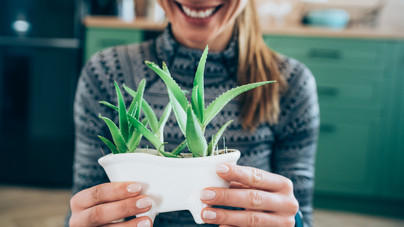 A legjobb házi gyulladáscsökkentő: így neveld az Aloe verát és használd fel a belőle kinyert gélt