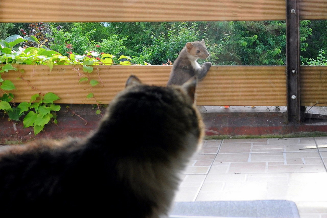"""""""Na, mi van csíra macska, most mit csinálsz, te verébarcú"""" - mondta a nyest. Forrás: Wikipédia"""