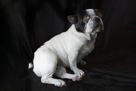 Miért ül a kutyád féloldalasan? Aranyos jelenség, de betegségre is utalhat