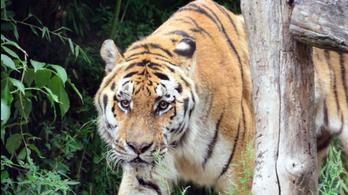 """Új lakója van a Fővárosi Állatkertnek, egy """"megözvegyült"""" állatot fog boldogítani"""