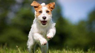 Akiknek vérükben a futás: ezek a kutyafajták szeretnek szaladgálni