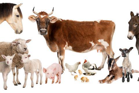 Üsző, ártány, na meg a jerke. Tudod, milyen állatokról beszélünk? – Kvíz!