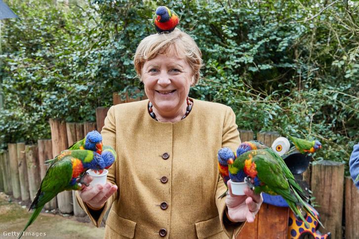 Itt még szent volt a béke a papagájok és a kancellár között.