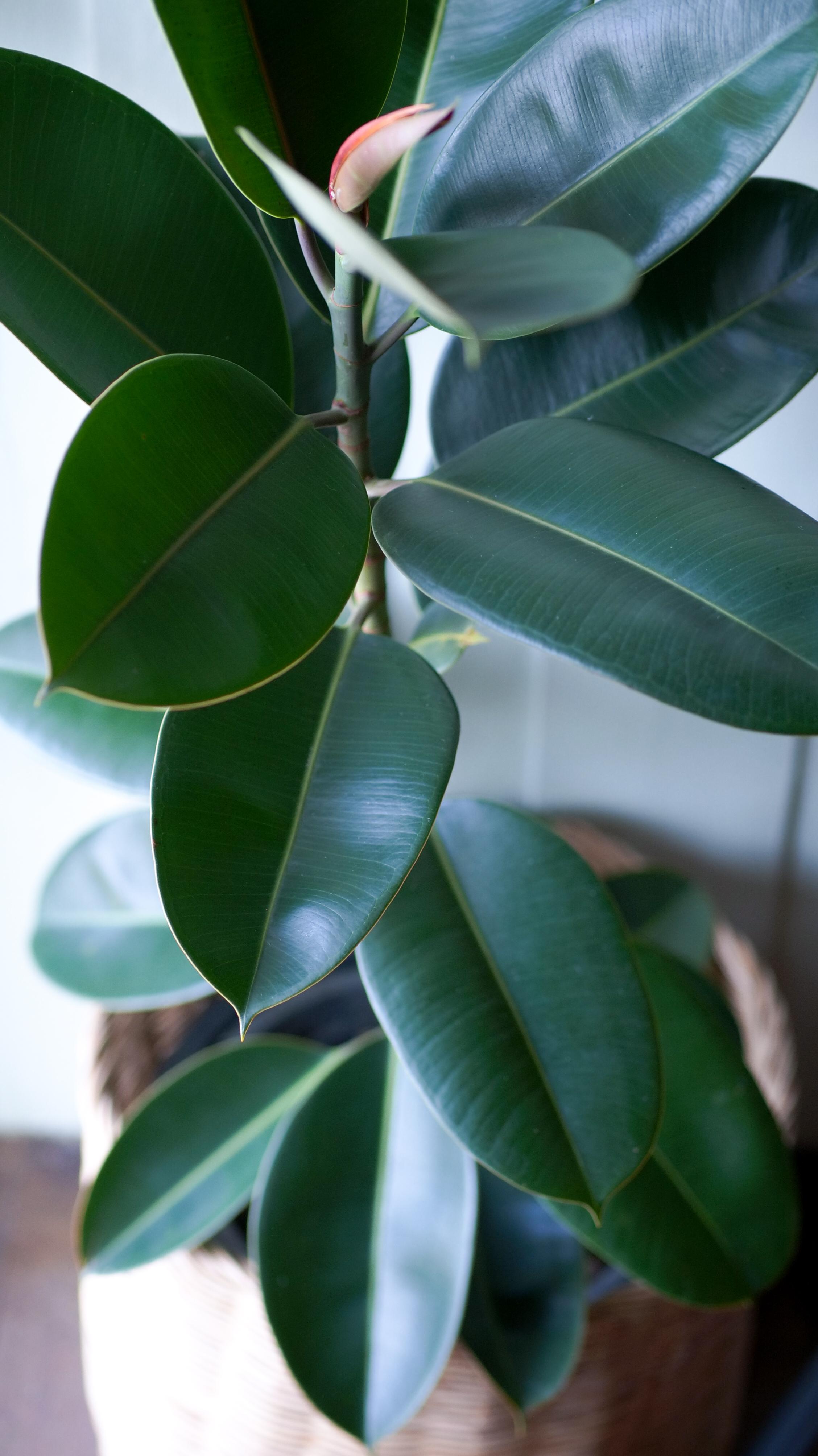 Milyen növényt látsz a képen?