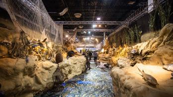 Vadat, halat és műtavat – ezt kínálja a vadászati világkiállítás