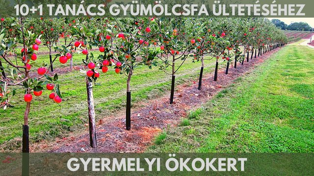 Ezeket a lépéseket ne hagyd ki gyümölcsfa ültetésénél!