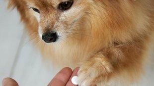 Ezekre a táplálékkiegészítőkre lehet szüksége kutyádnak