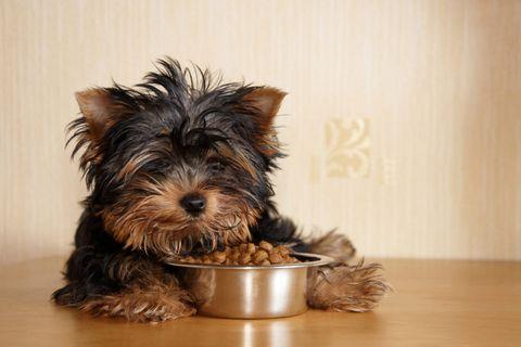 Gyakori tévhitek kutyád etetésével kapcsolatban: nem feltétlen a csirke okozza az allergiát