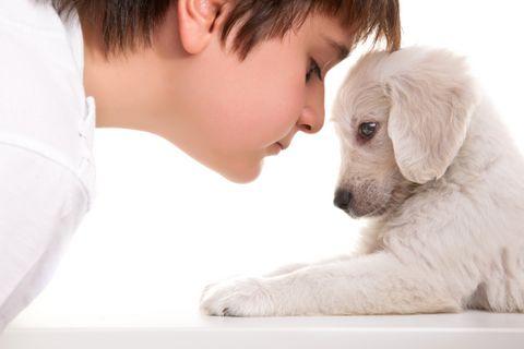 Nem szereti a kutyád a gyerekeket? Így kezeld a helyzetet!