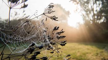 Rettegésben él a férfi, aki elkapott, majd elvesztett egy húszcentis pókot