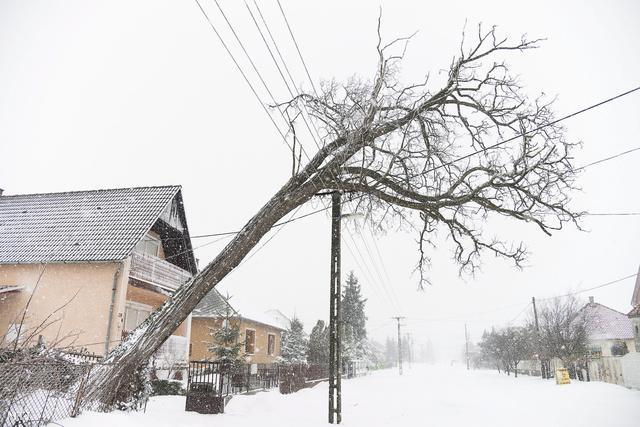 Elektromos vezetékre dőlt fa Kótajban, ahol egy napja nincs áram 2013. március 15-én. Szabolcs-Szatmár-Bereg Megyében 98 településen több mint hetvenezer háztartásban nincs áramszolgáltatás.