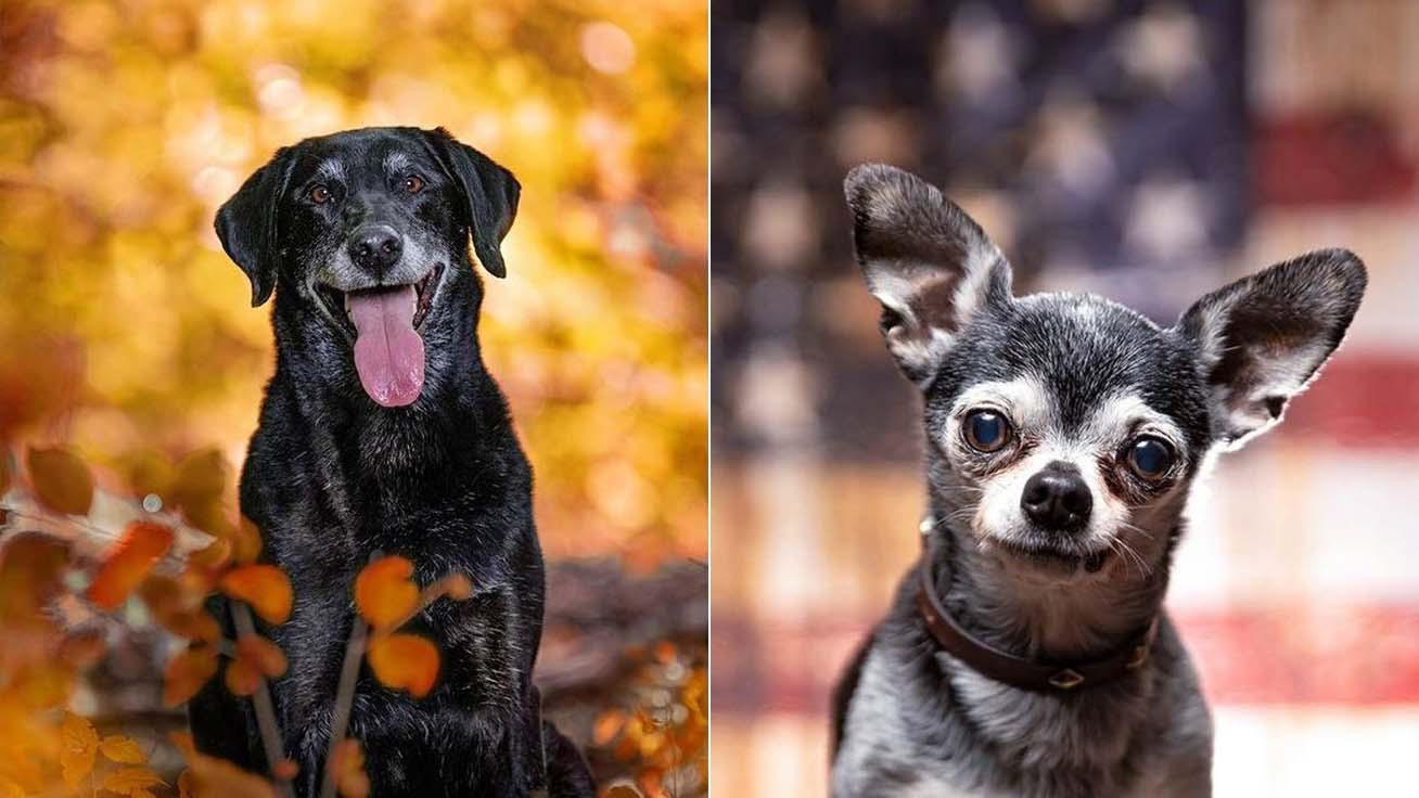 idős-kutyák-borító