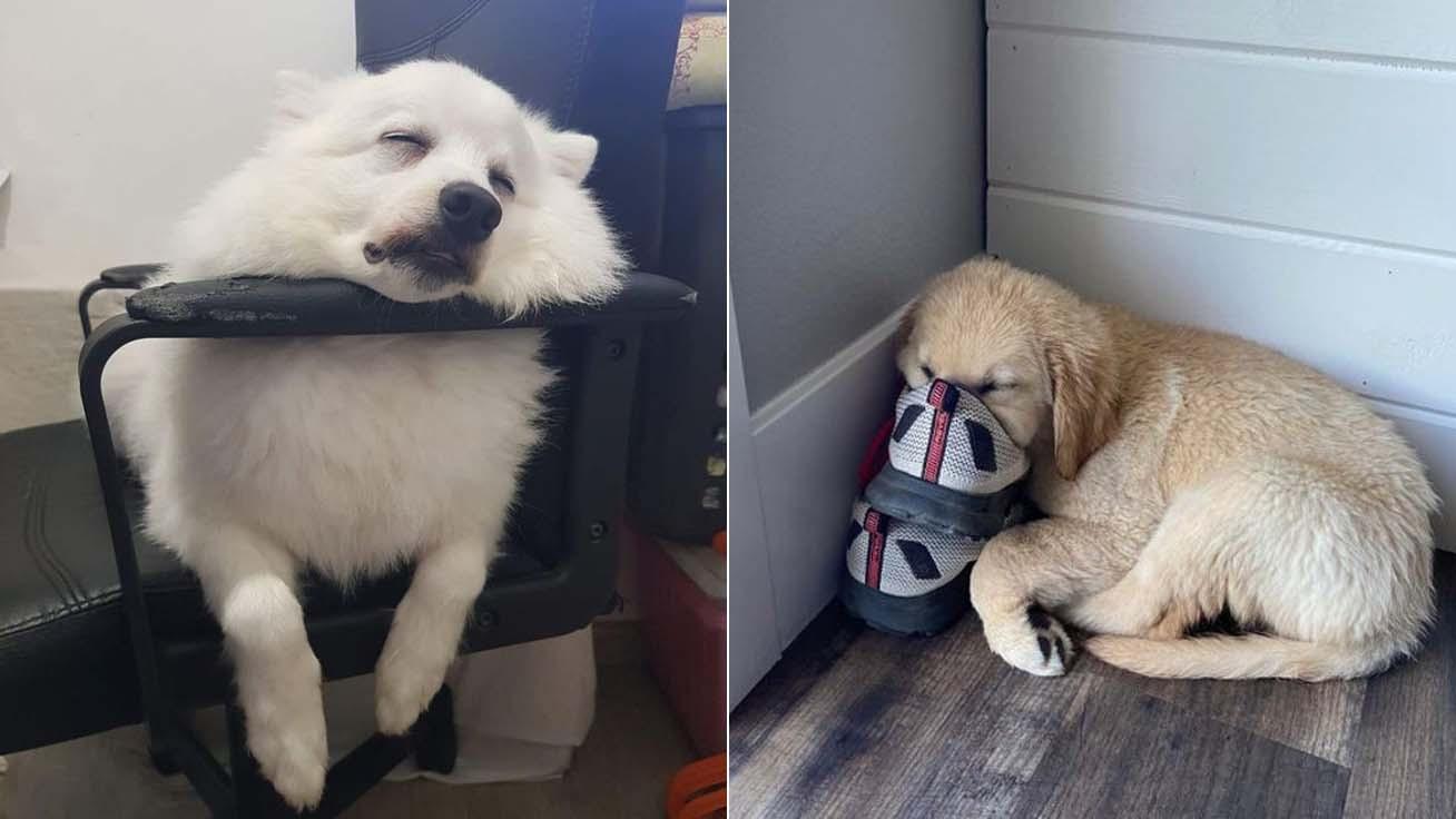 viccesen-alvó-kutyák-borító