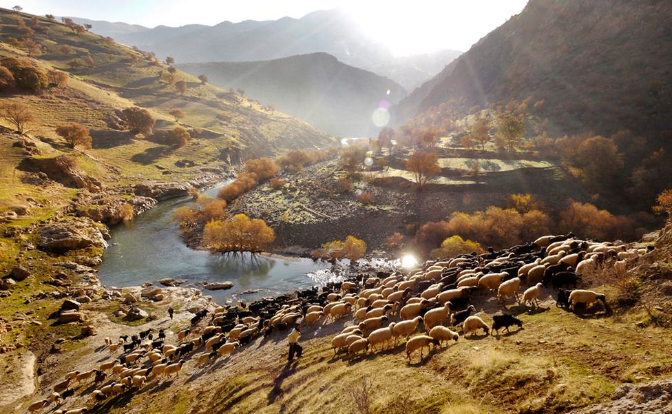 Két pásztor vezeti a nyájat az iraki határhoz közeli kurd település, Palangan közelében. Az élet a városokban és vidéken is nehezebb let az elmúlt években, miután Irán vitatott atomprogramja miatt egyre súlyosabb szankciókat vezettek be a nyugati hatalmak az ország ellen.