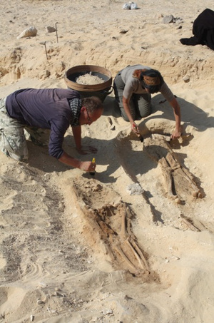 excavating-skeletons