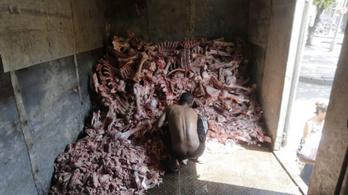 A járvány hatása: állati tetemekről fejtik le a húst az éhező emberek