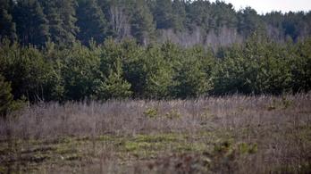 Még ma is mérgezi Csernobil a bajor erdőket