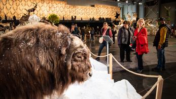 A vegán állatvédelem is szóba kerül a vadászati világkiállításon