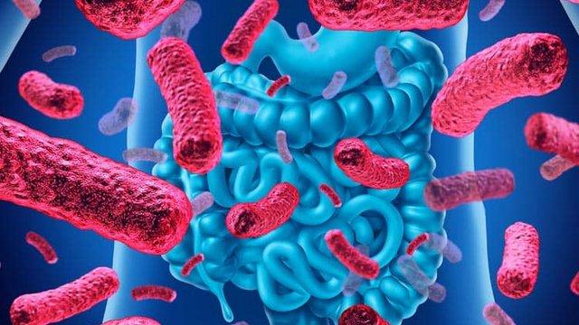 Mi az a mikrobiom?