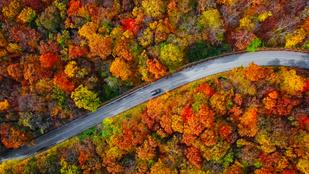 Miért sárgulnak nálunk a levelek ősszel, amikor Amerikában pirulnak?