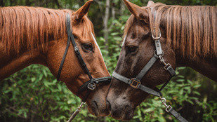 Így működik a Tinder az állatvilágban: jelzik egymásnak az állatok, ha megtetszik nekik valaki