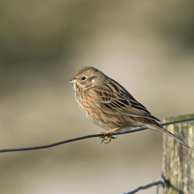 Minden ötödik európai madárfajt kihalás fenyeget: aggasztóak az eredmények