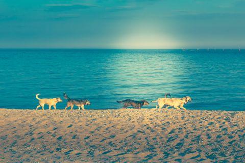 Megrögzött kutyaimádó vagy? Akkor erre a szigetre el kell látogatnod!!