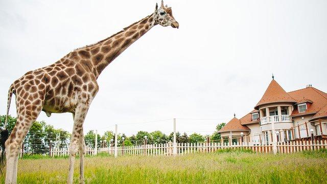 Egy csipetnyi Afrika Magyarországon: bemutatkozik a Kimba Elefántpark