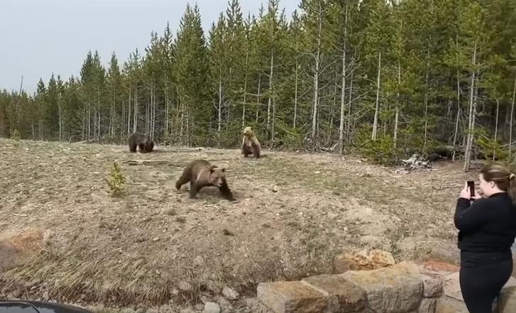 Részlet a videóból, melyben a medve ráijeszt a bocsaihoz túl közel merészkedő nőre