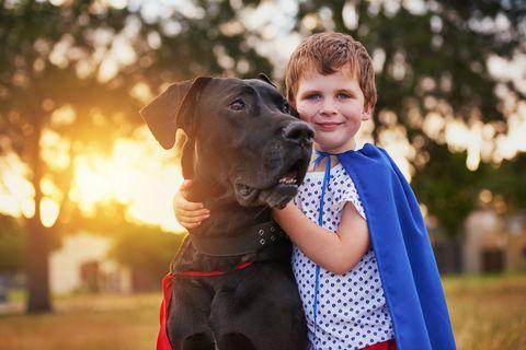 Gyerekeket mentő kutyák: a jack russell terrier két pitbullal harcolt