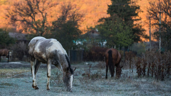A tudósok rájöttek, hol háziasították a lovat