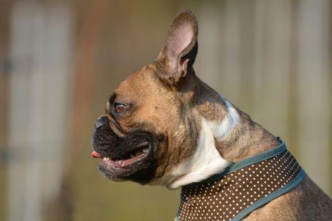 7 kutyafajta idős emberek számára: ha nyugodt kutyára van szükség