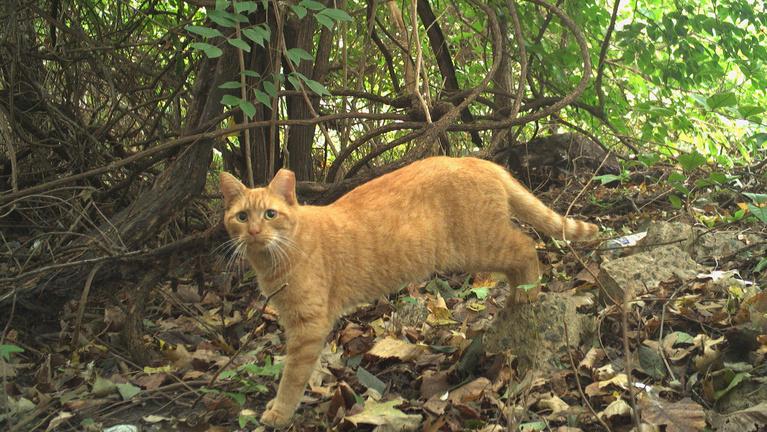 Megszámolták a macskákat Washingtonban