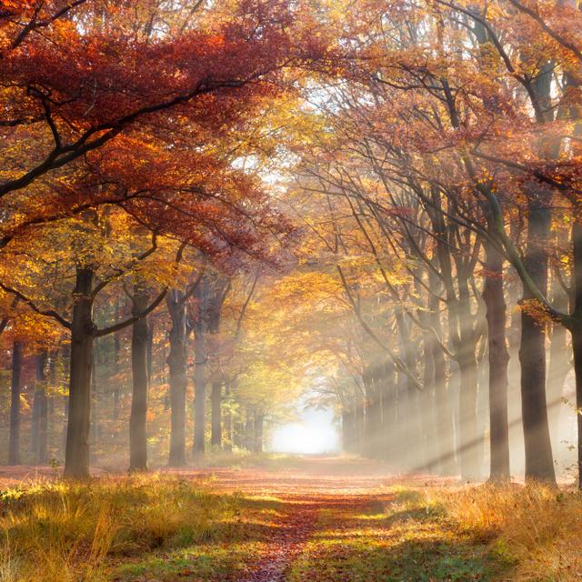 Kellemes fordulatot vesz az időjárás a héten: szép őszi napok várnak ránk