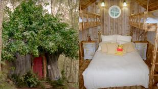 Mint a százholdas pagonyban: Micimackó inspirálta Airbnb várja a Disney-rajongókat
