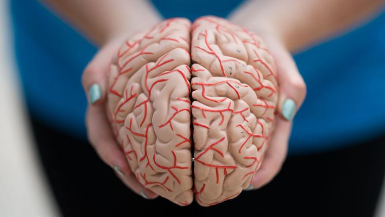 A társadalom miatt zsugorodik az emberi agy