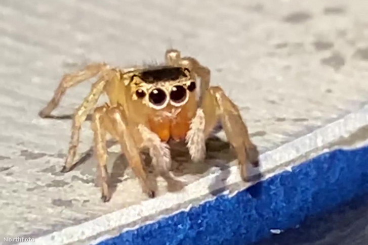 tk3s knm elton john spider 5