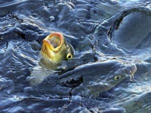 Mégsem telepíti ki a kormány a halászokat