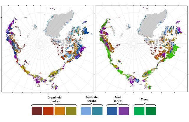 A bal oldalon látható a vegetációs most megfigyelt eloszlása, a jobb oldalon pedig a 2050-re jósolt zöldülés