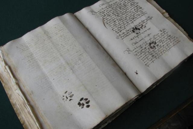 catprints 0