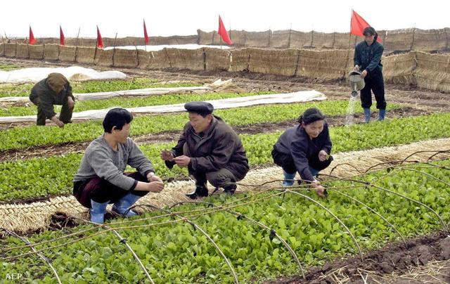 Észak-koreai termelőszövetkezet